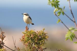 Fåglar och andra djur